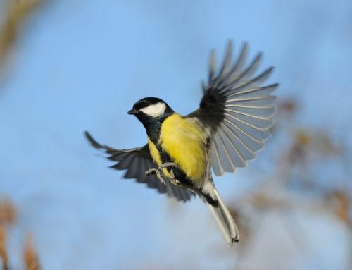 So helfen Sie den Vögeln