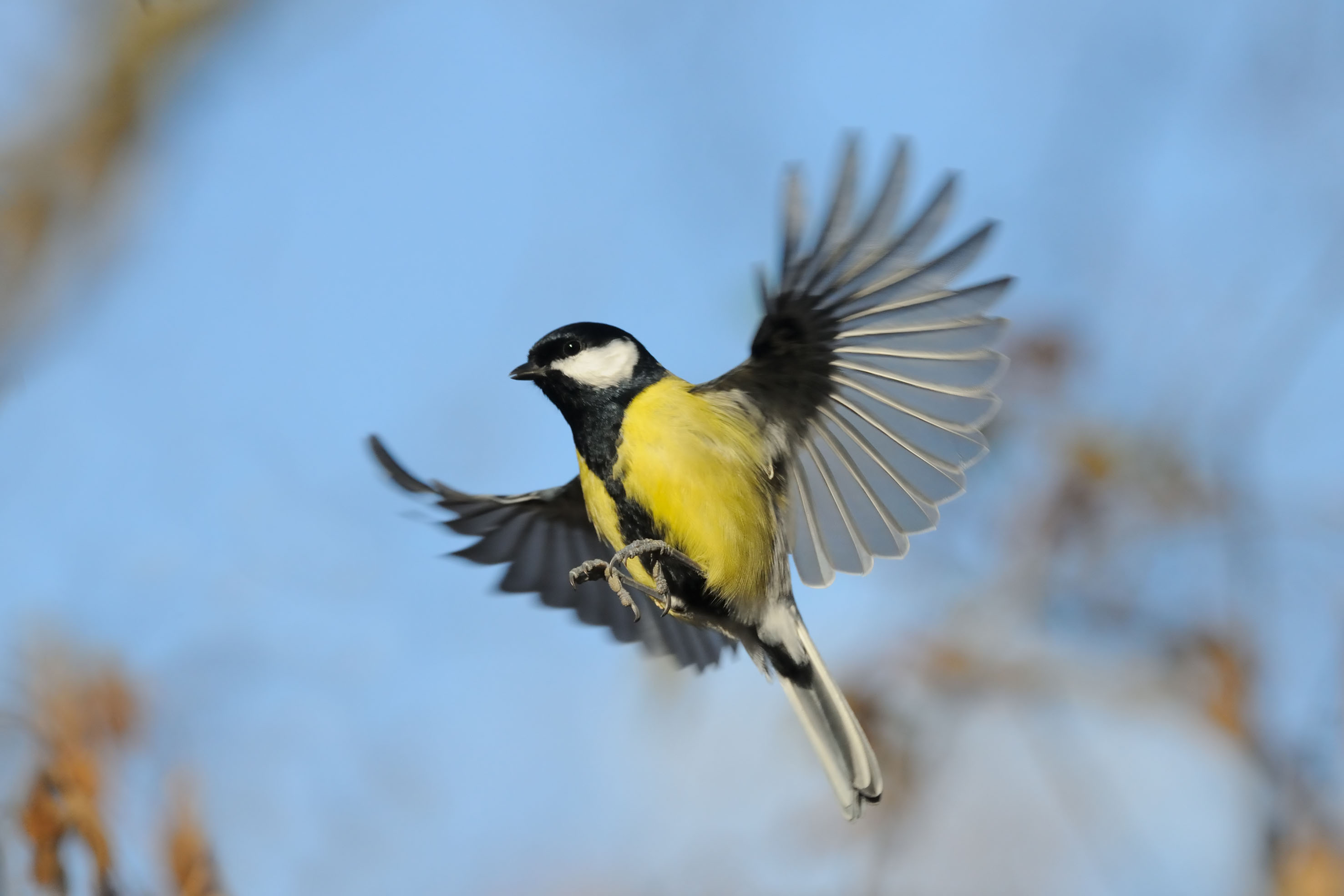 So Helfen Sie Den Vögeln Wintergarten Ratgeber