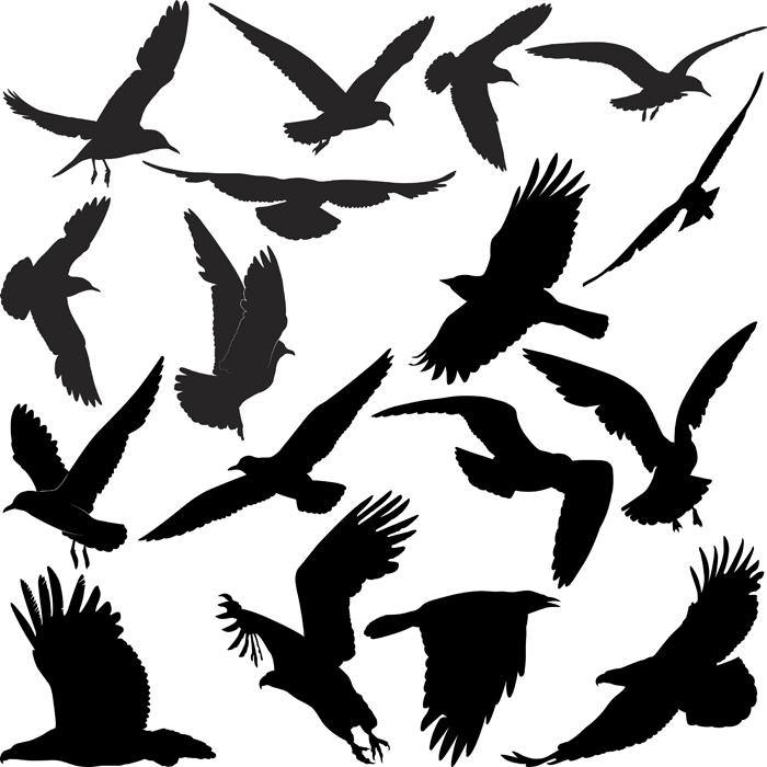 Schwarze Silhouetten von Vögeln vor weißem Hintergrund